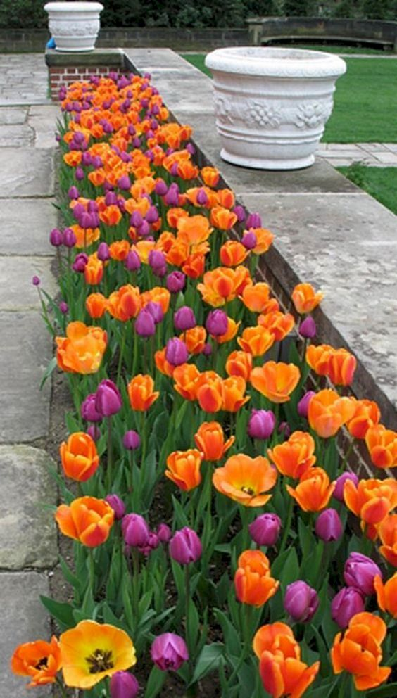 Terrific in Tulips – Gorgeous Garden Bed Ideas