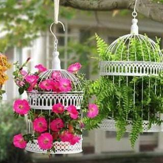 Blossoming Birdcages – Stunning and Spectacular