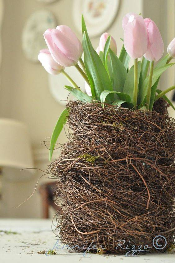 A Bird's Nest - A Breath of Nature