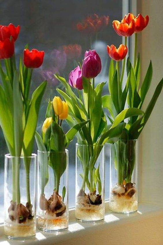 Growing Tulips - Spring Floral Table Decor