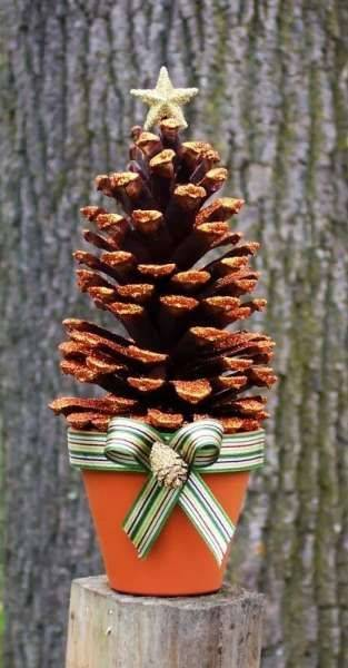A Cute Pinecone - Growing it in a Pot