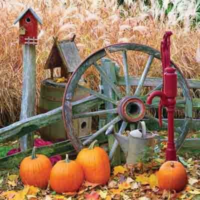 Festive for Fall - Fall Decorating Ideas for Outside