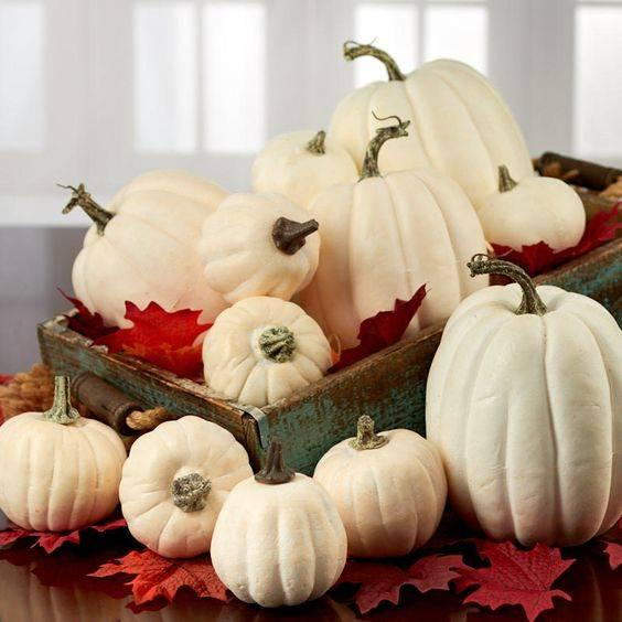 A Crate of Pumpkins - Traditional and Rustic