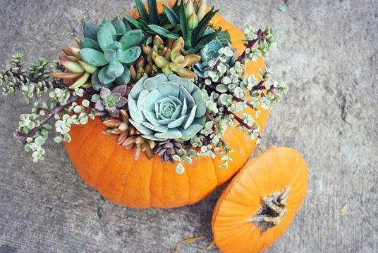 A Pumpkin Vase – Halloween Pumpkin Decorations