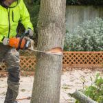 The Importance Of Professional Tree Maintenance In Your Backyard
