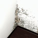 How to Detect and Eliminate Mould Within Your Home