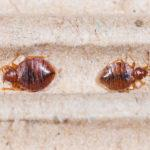 Importance of regular pest control for your home