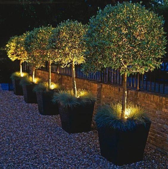 Lighting from Below - Garden Lighting Designs