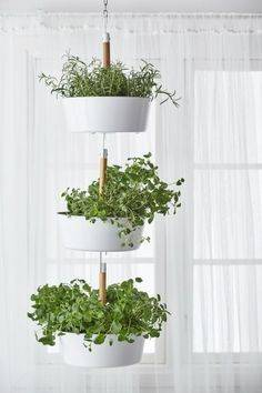 Hanging From the Ceiling - Best Indoor Herb Garden Designs