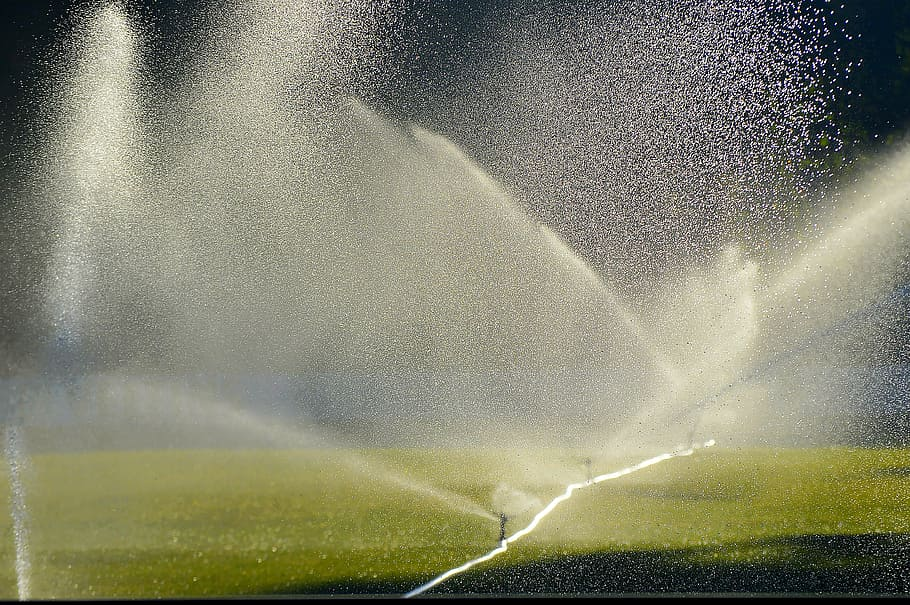 person, throwing, water, plants, lawn irrigation, sprinkler, football pitch, morning, mood, early in the morning