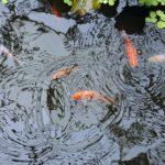 10 Things to Consider When Building a Pond