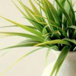 Cleansing Your Home: 5 Indoor Plants That Can Purify Air