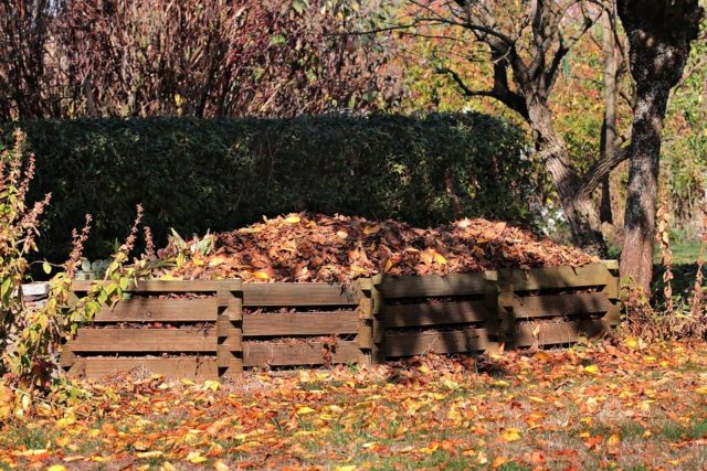 Autumn, Meadow, Leaves, Nature, Grass, Tree, Compost