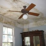 What You Need to Know Before You Hire a Mold Remediation Company