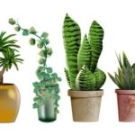 Get A Plant Delivery To Brighten Up Your Home