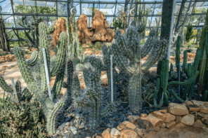 Conservatory with cacti